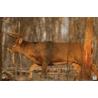 Birchwood Casey Eze-Scorer Whitetail Deer Target Folded 23x35 Inch 2 Per Package 37481